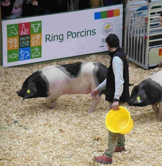 法国农业博览会