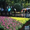 重庆市菊花艺术展
