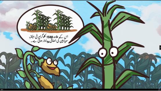中国技术助巴基斯坦产大豆