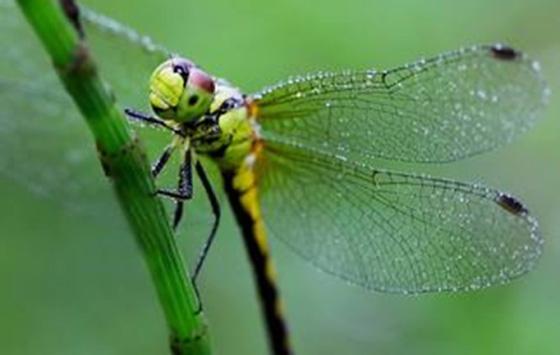 蜻蜓折纸步骤图解