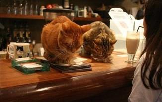 """""""网红""""宠物咖啡馆的安全隐患:逗猫被抓伤 责任怎么算?"""