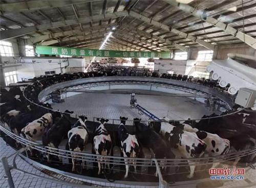 奶牛福利、数字奶源 蒙牛推进高质量奶源新探索
