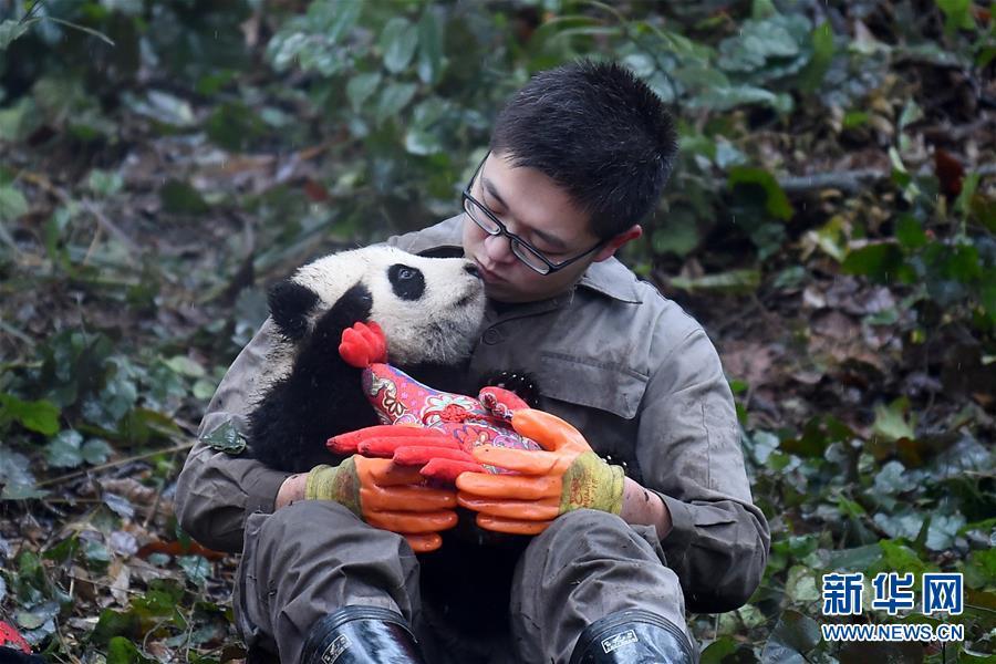 (社会)(5)大熊猫宝宝迎新年