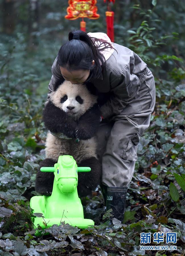 (社会)(8)大熊猫宝宝迎新年