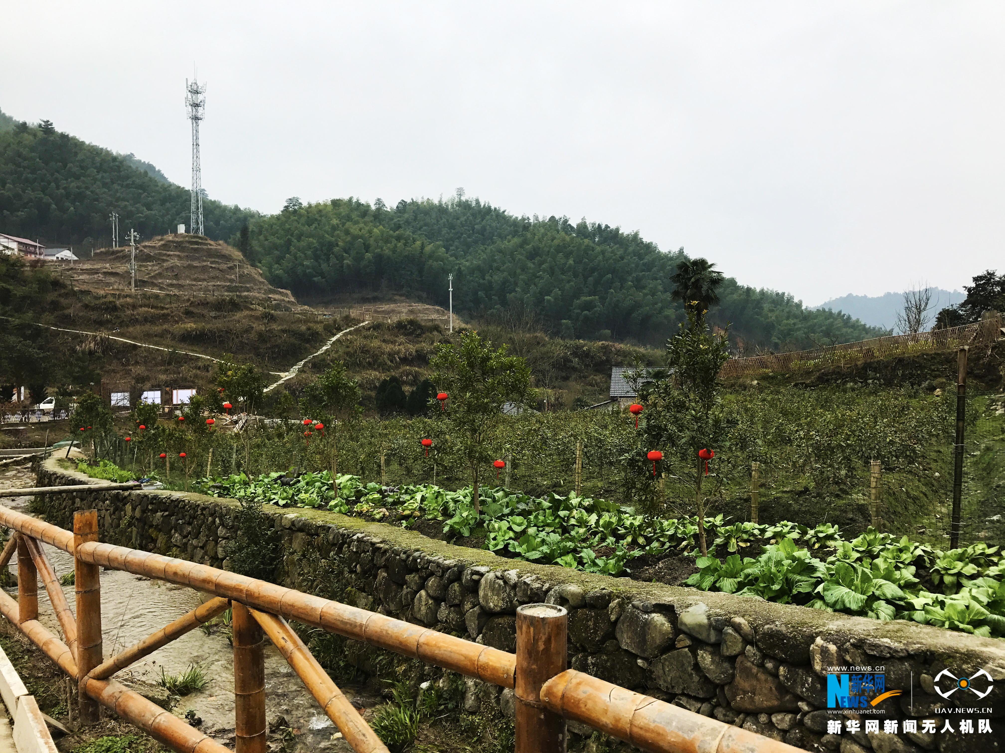【网络媒体走转改】新华网航拍:井冈山神山村致富换新颜
