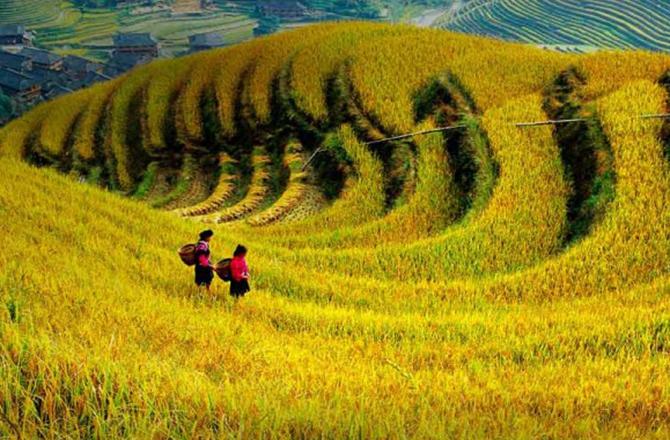 """一号文件提出的""""推进农业结构调整""""政策思路的深化"""