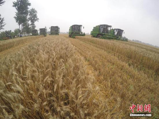 6月3日,收割机在麦田中收割。当日,安徽省涡阳县万亩麦田大面积收割,当地农业合作社使用联合收割机、打捆机、灭茬机、免耕播种机、粮食烘干机联合作业,实现了从粮食收获、秸秆还田综合利用、下季作物播种到粮食烘干、售卖的一体化作业,大幅提高了作业效率和经济效益。<a target='_blank' href='http://www.chinanews.com/' _fcksavedurl='http://www.chinanews.com/'></p></table>中新社</a><p>  记者 张娅子 摄