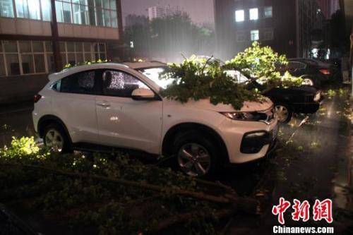 图为河北某地汽车被刮倒的树木砸伤。 于俊亮 摄