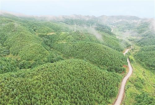 全国集体林权制度改革成就综述:山定权 生态美 百姓富