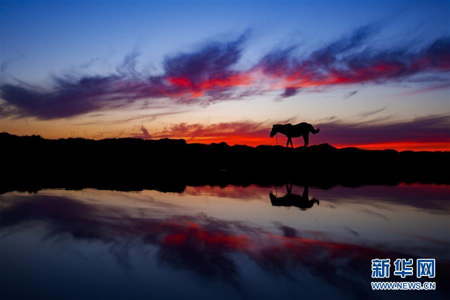 #(美丽生态)(1)美丽的巴里坤草原