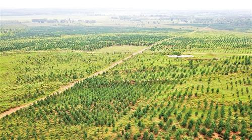 草原那边花正开——内蒙古自治区扎实推进生态文明建设