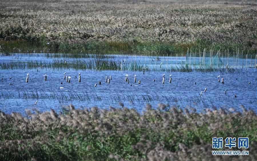 (环境)(1)南迁候鸟陆续飞抵莫莫格湿地