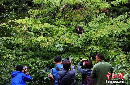 图为香格里拉滇金丝猴国家公园。 <a target='_blank' href='http://www.chinanews.com/' rel=