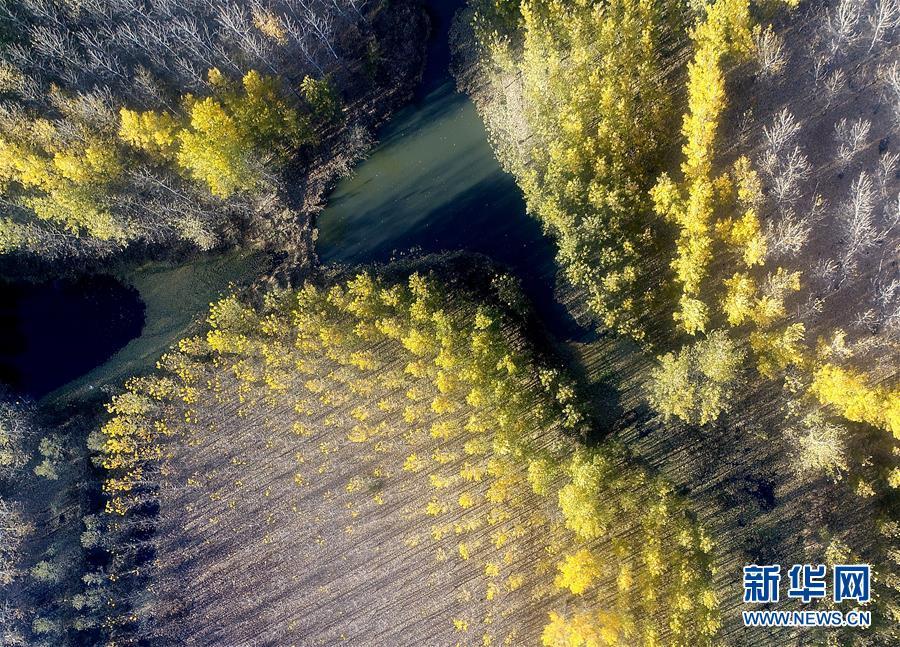(环境)(1)水库防护林美景如画