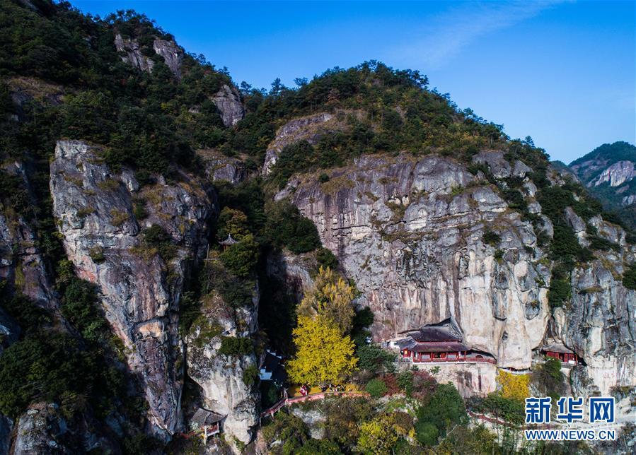 空中俯瞰浙江省建德市大慈岩景区的古银杏树(11月23日摄).