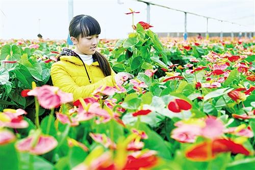 家庭园艺推动花木产业增效