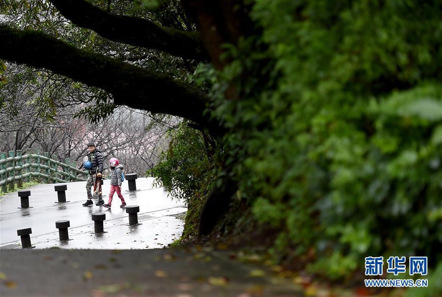 (XHDW)(1)雨中踏访台北阳明山