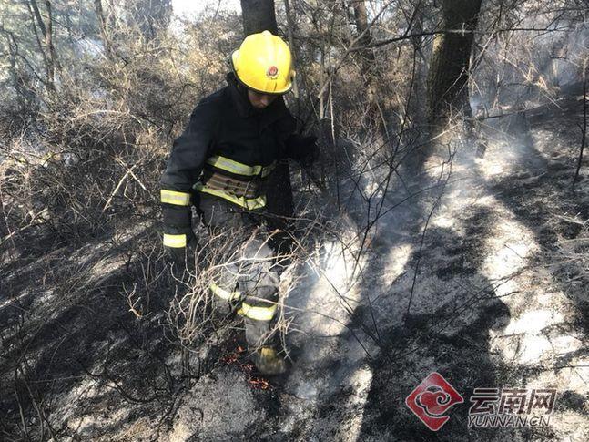 云南昭通发生森林火灾 烧毁森林面积数百亩
