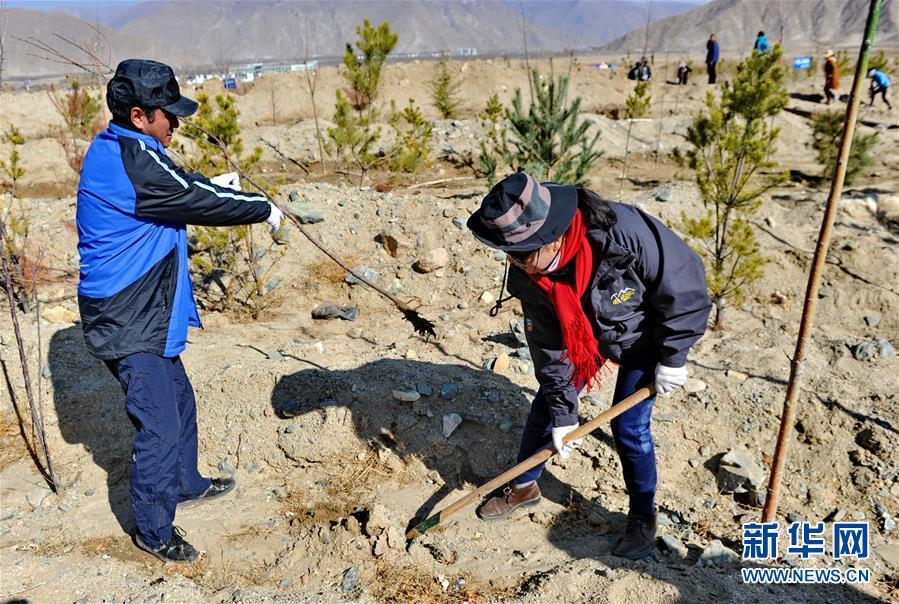 (环境)(1)西藏启动大规模国土绿化行动
