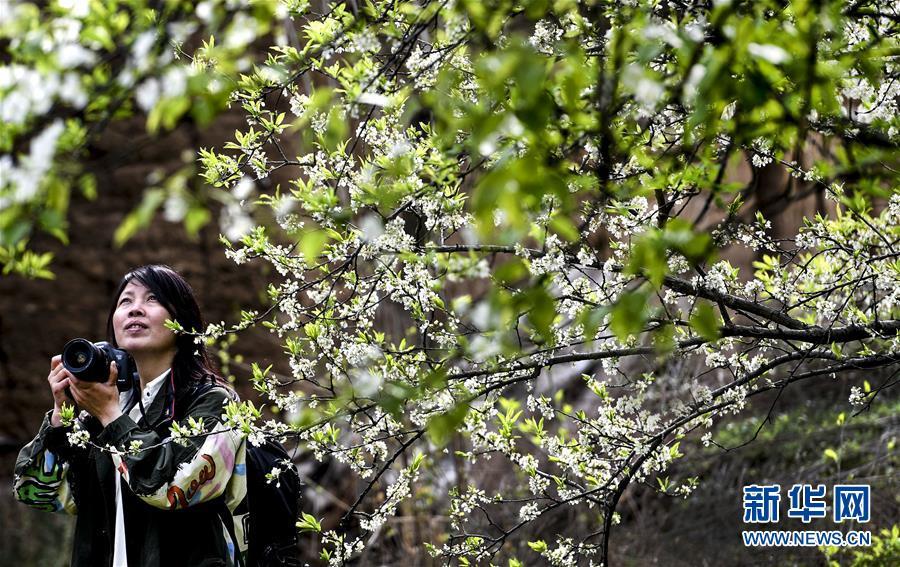 (春季美丽生态)(1)春到汉江回龙湾