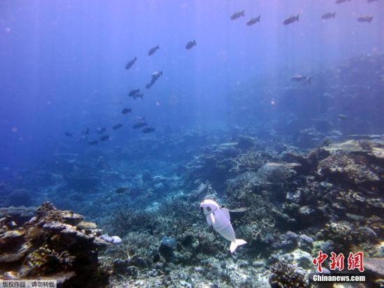 中国海洋发展基金会海峡资源保护与开发专项基金在闽成立