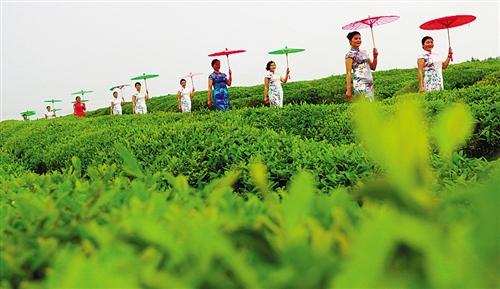 国际娱乐平台时时彩:江西金溪:生态经济激发城市活力