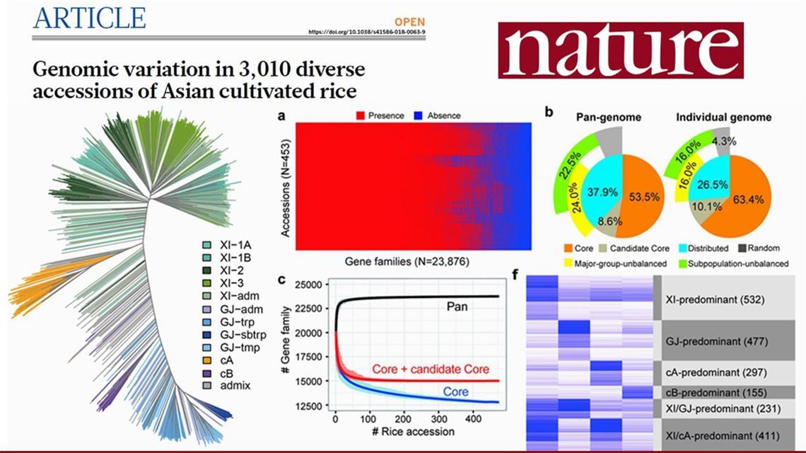 北京赛车pk10微信群:中国科学家牵头绘制精细水稻基因图谱_开启水稻精准化育种大门