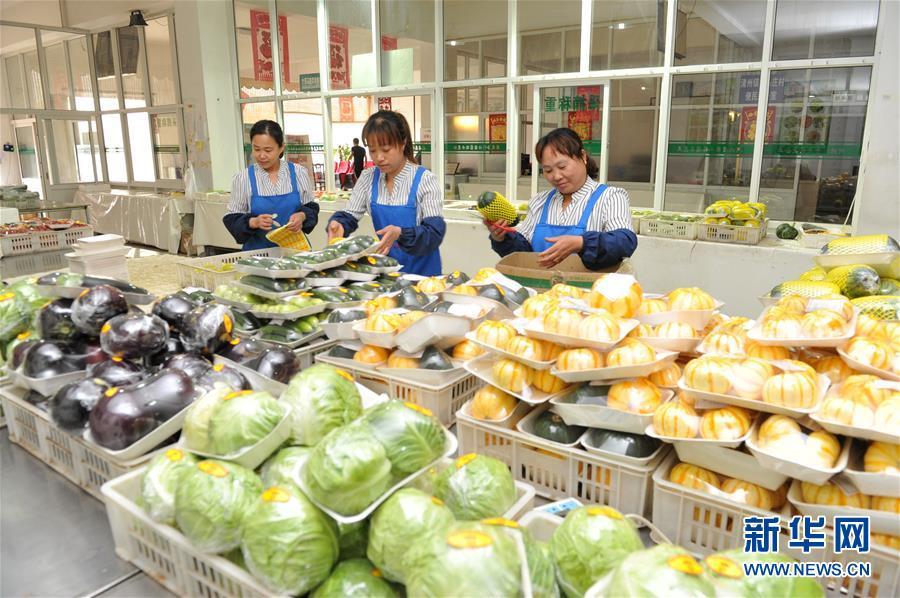 (经济)(1)河北青县:瓜菜产业铺就乡村振兴路