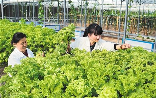 沉陷区建起生态农业。[阅读]