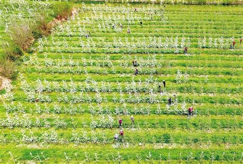 """时时彩十大信誉平台:""""一带一路""""农业协作蓝图正在展开"""
