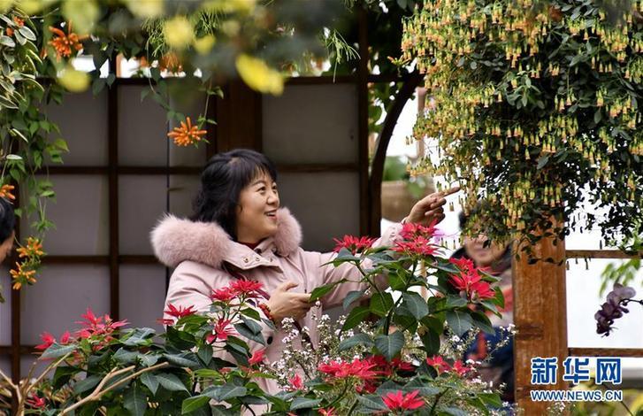(社会)(3)北京:赏花卉 过春节