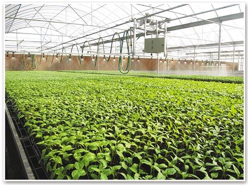 寿光现代化蔬菜大棚。 经济日报-中国经济网记者 瞿长福摄