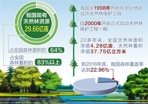 我国森林覆盖率提高到22.96%