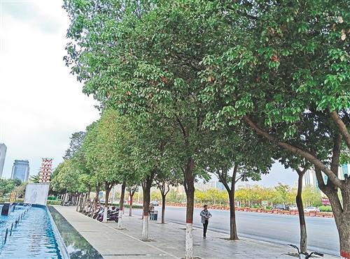 """河南信阳:""""红色之城""""绿色发展"""