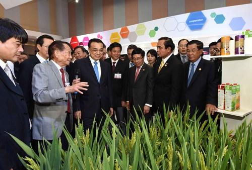 强向湄公河五国领导人赠送杂交水稻大米图片