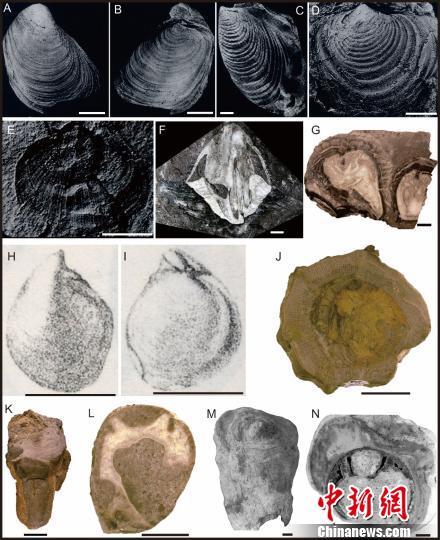 图为印度板块及拉萨板块晚中生代低纬度和高纬度分布双壳类化石。南古所 供图
