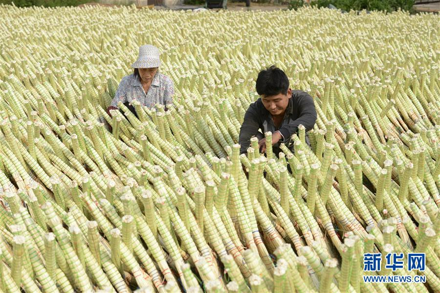 (经济)(3)河北乐亭:笤帚出口助增收