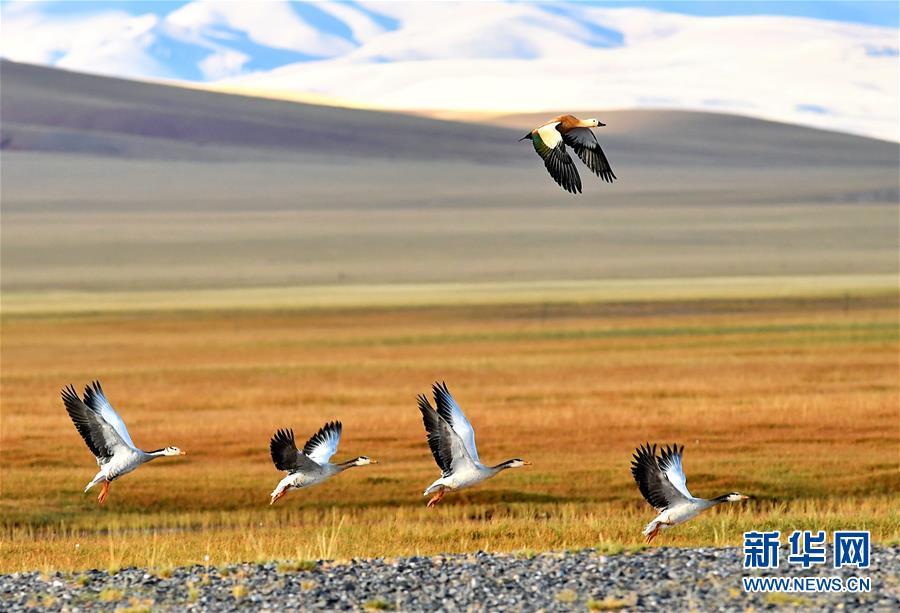 (环境)(1)我国湿地面积8亿亩 位居世界第四
