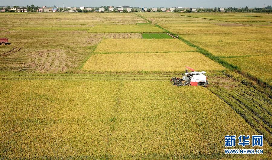 (经济)(1)江西南昌:抢收早稻