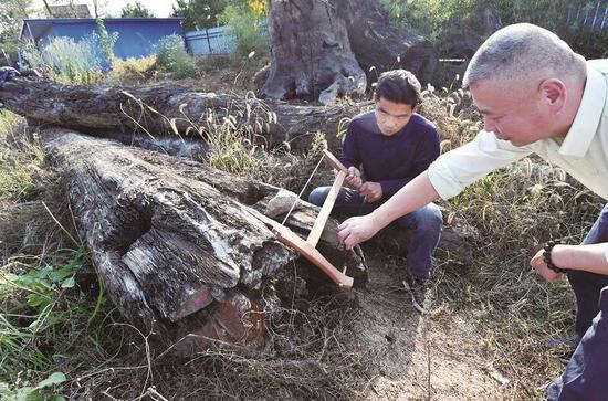 男子发现明代金丝楠阴沉木:初步鉴定价值两千万 主人表示要捐给故宫