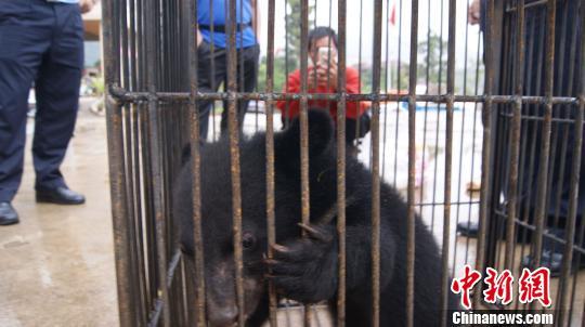 图为男子上交的小黑熊憨态可掬。绿春县森林公安局供图