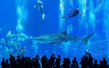潜水戏鲸鲨