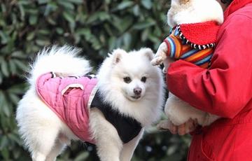 药品异烟肼能治不文明养犬?律师:投放涉嫌犯罪