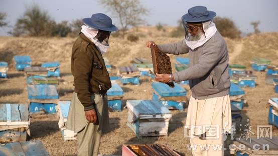 """巴基斯坦蜂蜜胜过新西兰?中巴""""蜜""""会路径探索"""