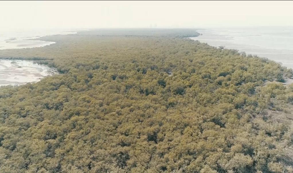 红树林保护 巴基斯坦方将借鉴中国经验