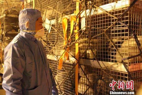 中国最大规模进口丹麦北极狐运抵青岛系山东口岸首次