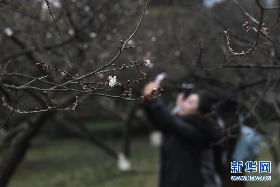 (环境)(1)杭州:超山探梅