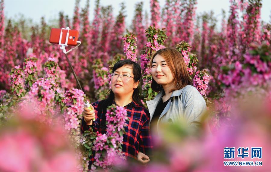 (环境)(1)赏花踏青享春光