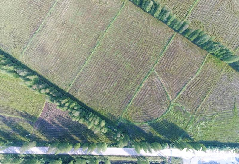 南昌市新建区象山镇新增圩农田防护林带像一道道绿色的屏障保护着千亩良田。