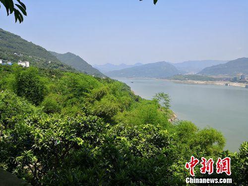 重庆云阳:发展特色经济林生态富民两不误